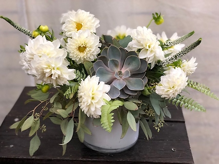 White dahlias with succulents