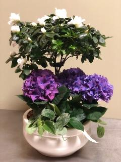 Hydrangea and Azalea planter