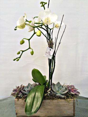 Woodland Orchid Planter