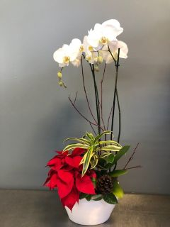 Christmas Orchid Planter